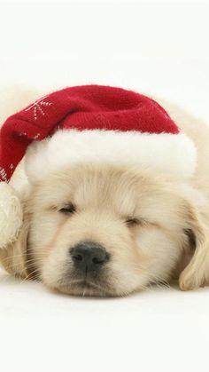 クリスマスわんちゃんiPhone壁紙 W