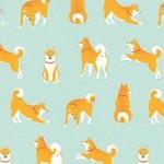 柴犬がいっぱいiPhone壁紙 Wall