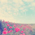 おしゃれ☆花畑と空