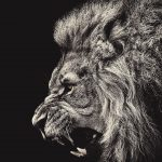 ライオンブラック