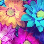 カラフルな花