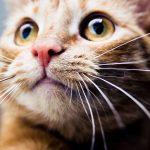 かわいい猫23