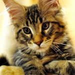 かわいい猫8