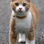 かわいい猫22