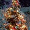 [クリスマス]クリスマスツリー