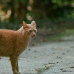かわいい猫21