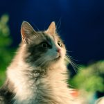 かわいい猫15