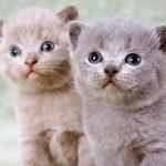 かわいい猫11