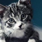かわいい猫17