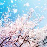 おしゃれ✨️かわいい💓花柄[03]無料高画質iPhone壁紙