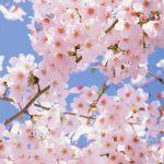 おしゃれ✨️かわいい💓花柄[08]無料高画質iPhone壁紙
