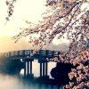 季節を感じる桜の無料高画質iPhone壁紙[07]