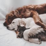 仲良し三匹🐕🐩🐈のかわいい💓お昼寝無料高画質iPhone壁紙