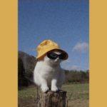 レトロな猫ちゃん🐈無料高画質iPhone壁紙