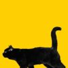 黒猫の散歩無料高画質iPhone壁紙