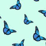 青い蝶🦋無料高画質iPhone壁紙